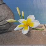 Fleur de tiaré