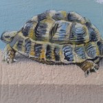 animaux_tortue