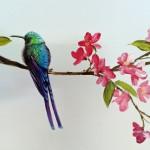Oiseau exotique sur branche de cerisier du Japon