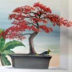 plante_bonsai