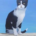 Portrait du petit chat